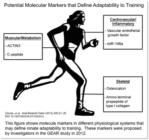 This figure shows molecule markers in different physiological systems that may define innate adaptability to training.  These markers were proposed by investigators in the GEAR study in 2012.