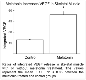 Ratios of integrated VEGF release in skeletal muscle with or without melatonin treatment. The values represent the mean � SE. *P < 0.05 between the melatonin-treated and control groups.