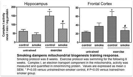 Smoking dampens mitochondrial biogenesis training response.  Smoking protocol was 8 weeks.  Exercise protocol was swimming for the following 8 weeks.  Complex I, an electron transport component in the mitochondria, activity was measured and quantified in nmol/min/mg protein.  Values are expressed as mean � SEM. * P<0.05 versus untrained/non-smoker control, # P<0.05 versus trained/non-smoker group.