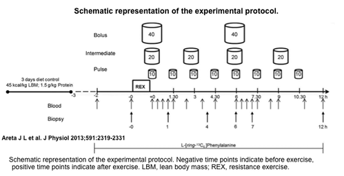 Schematic representation of the experimental protocol. Negative time points indicate before exercise, positive time points indicate after exercise. LBM, lean body mass; REX, resistance exercise.