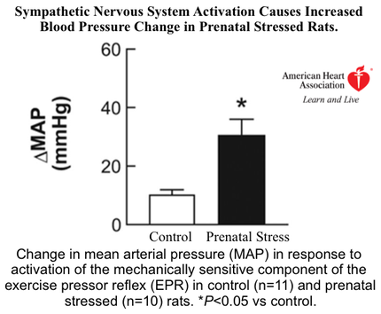 Sympathetic Nervous System Activation Causes Increased Blood Pressure Change in Prenatal Stressed Rats.