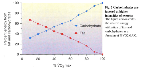 carbohydrate fat VO2 max