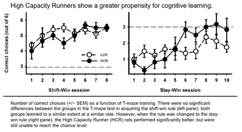 Number of correct choices (+/− SEM) as a function of T-maze training. There were no significant differences between the groups in the T-maze test in acquiring the shift-win rule (left pane): both groups learned to a similar extent at a similar rate. However, when the rule was changed to the stay-win rule (right pane), the High Capacity Runner (HCR) rats performed significantly better, but were still unable to reach the chance level.